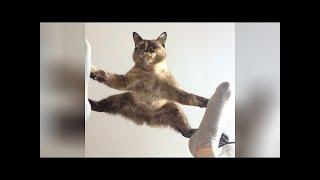 cutTry Not To Laugh Watching Funny Animals Compilation | Funniest Animals Vines 2020